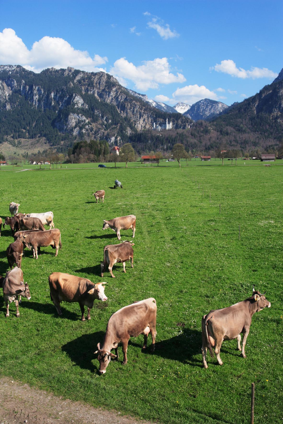 Bum_Alpenlandschaft_4